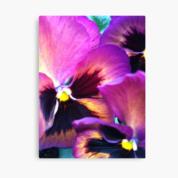 Ppppa Pansy Canvas Print