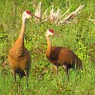 Captivating Cranes by lorilee