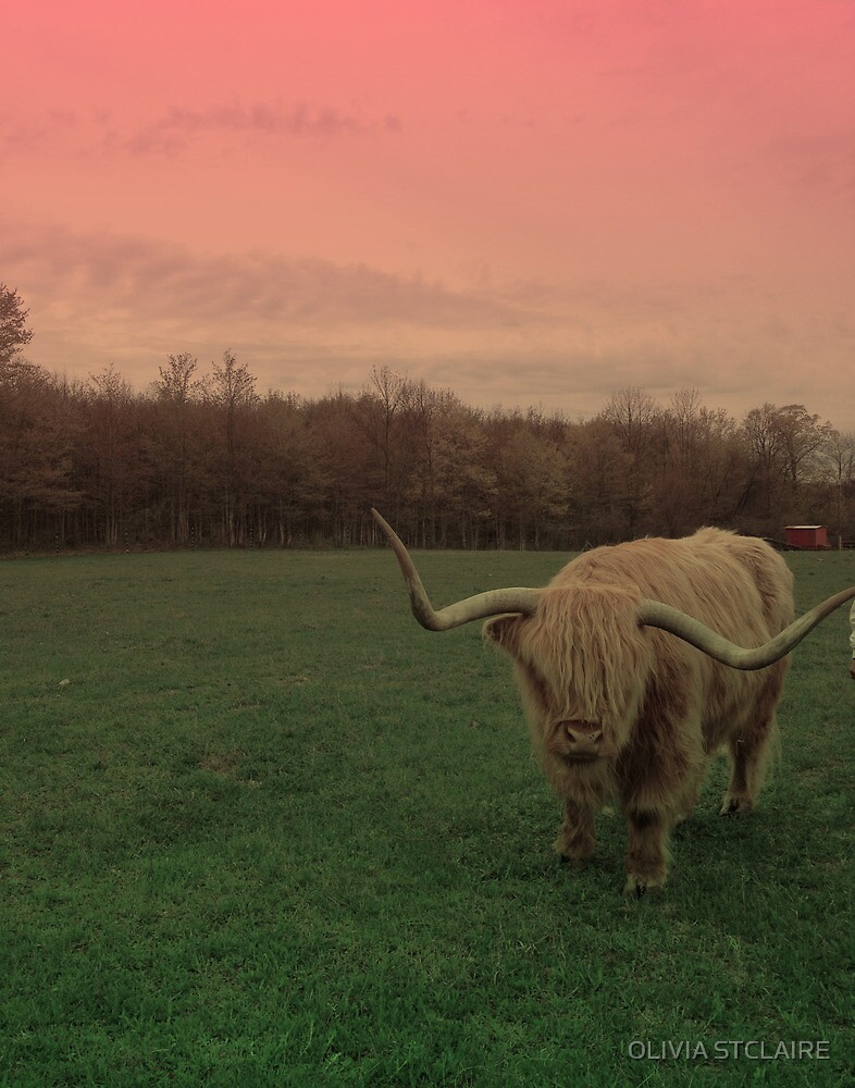 Scottish Highland Steer in pasture by OLIVIA JOY STCLAIRE
