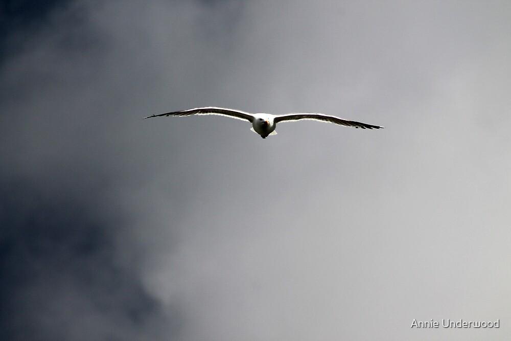 Flight Path by Annie Underwood