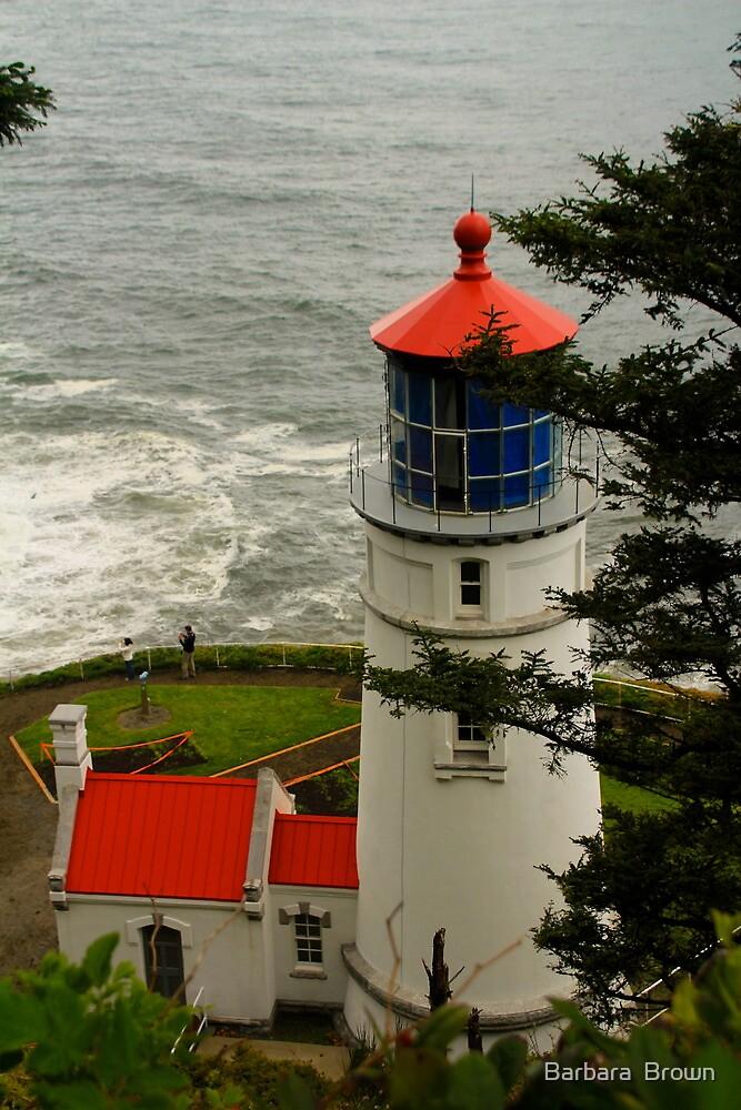 Heceta Head Lighthouse by Barbara  Brown