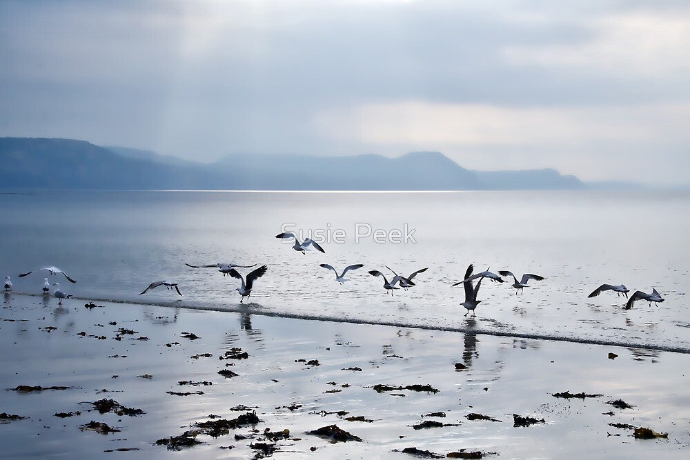 Dance Of The Seagulls by Susie Peek