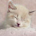 Kitty's Bedtime Prayer by ibjennyjenny