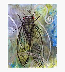 Red-Eyed Cicada Photographic Print
