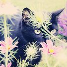 Flower Kitty by Kimberly Palmer