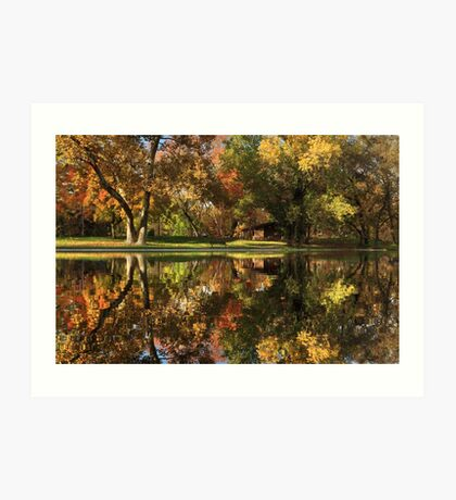 Sycamore Reflections Art Print