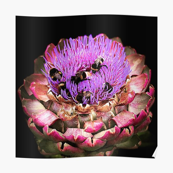 Bee Party on Artichoke Poster