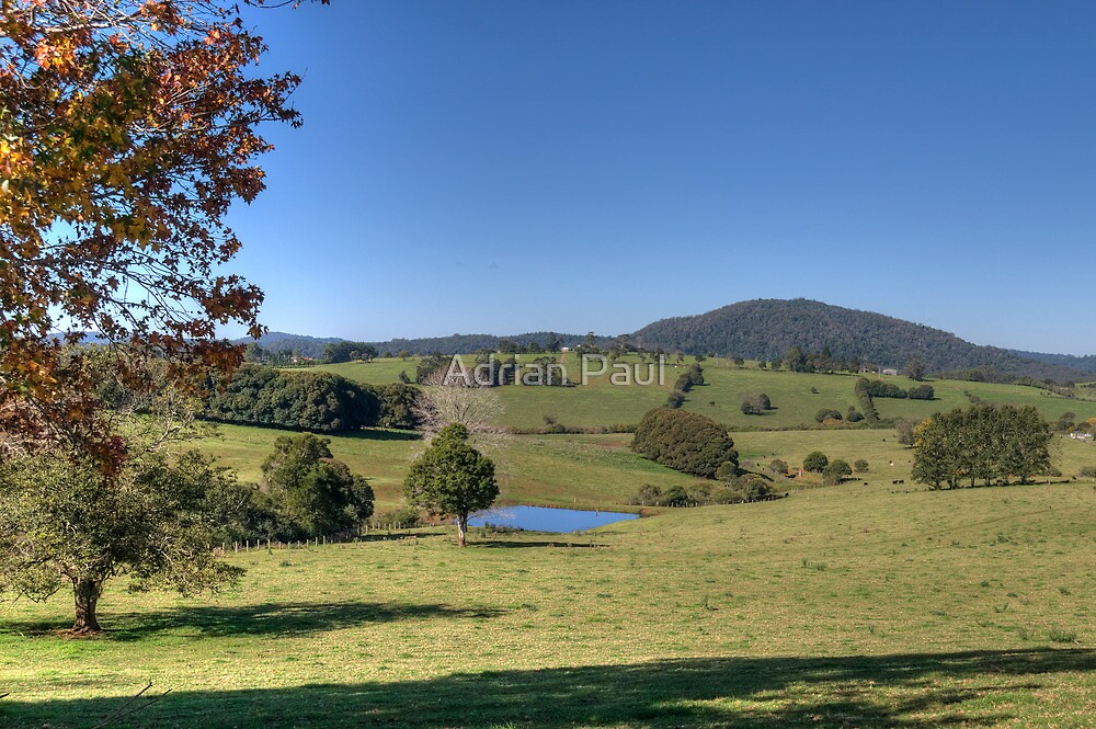 Dorrigo Plateau Beauty by Adrian Paul