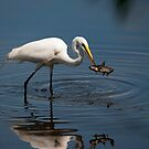 Great White Egret Hunter by Joe Jennelle