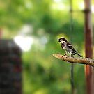 Lil Bird by Terry Arcia