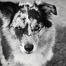 Loyal Companion by Alyssa Passlow