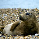Seaford's Celebrity Seal by mikebov