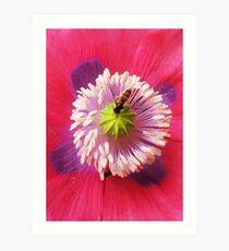 Pollinating Art Print
