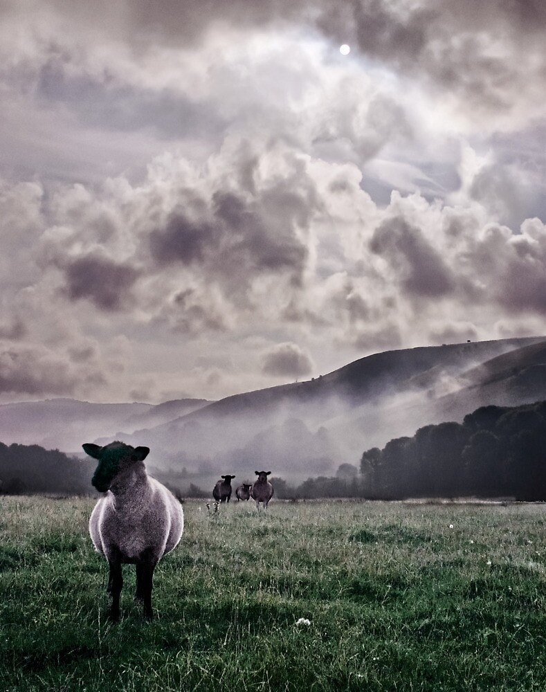 Sheep in the Mist by Heather Buckley