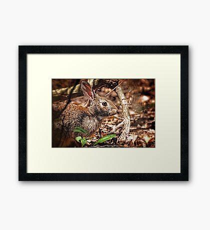 Rabbit HDR Framed Print