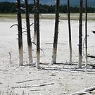 Poles by BrianAShaw