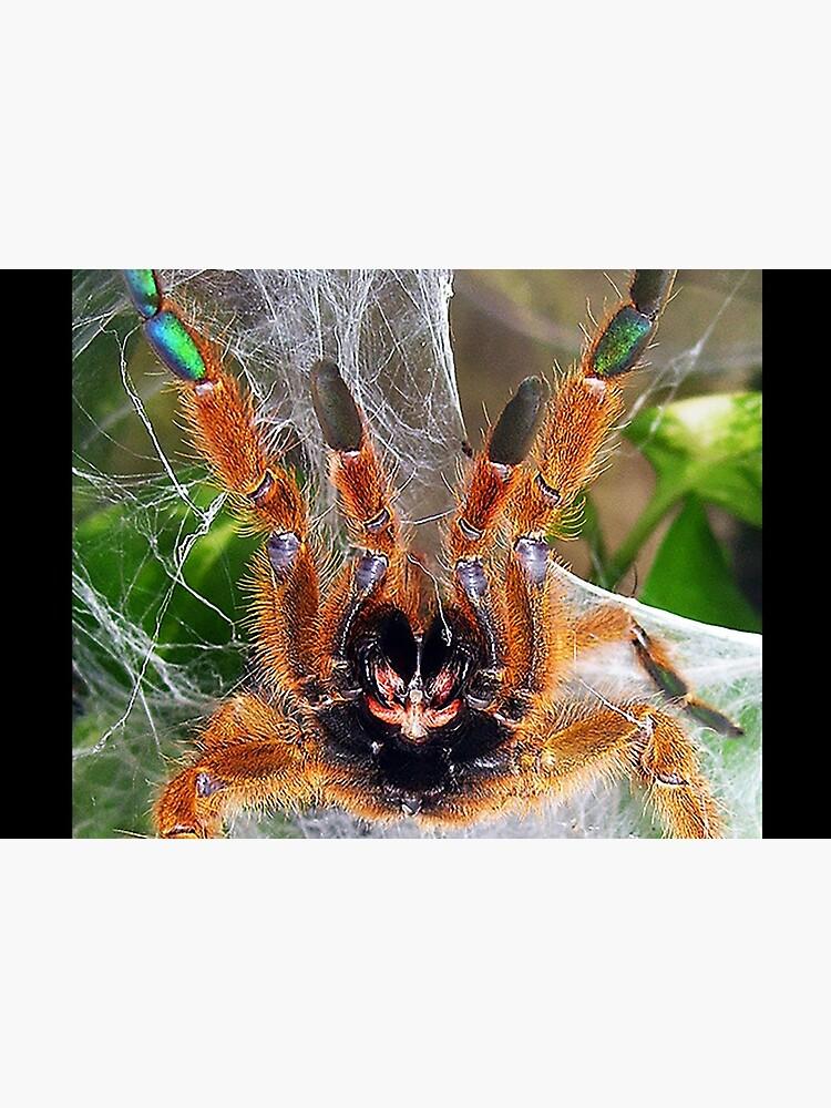 Orange Baboon Fangs! by mark-bugs-org