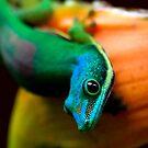 View 3 of  Day gecko ( Phelsuma Lineata )  - antasibe  Madagascar by john  Lenagan