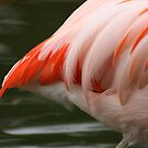Tails from a Flamingo by Chelsea Brewer