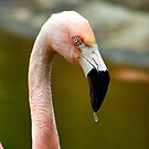 Flamingo Drops by Chelsea Brewer