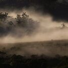 Mist & Trees.. by debsphotos