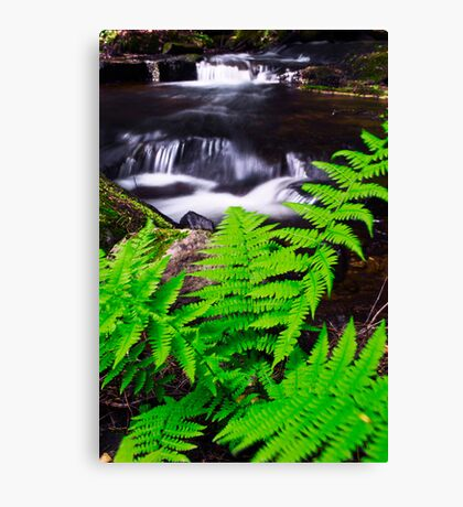 FerniFied Canvas Print