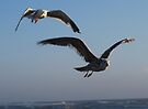 Two Seagulls in Flight by Tori Snow