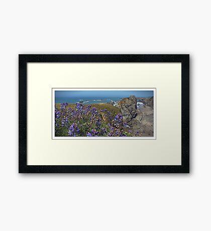 Coastal Lupine Framed Print