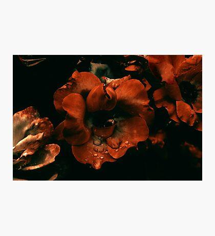 Evanescent Photographic Print