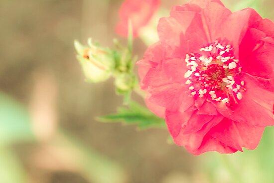 Red Flower by Elizabeth Thomas
