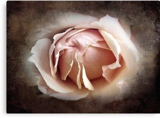 My Love is Unfolding by Ellen Cotton