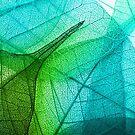 Transparent Leaf by KarterRhys
