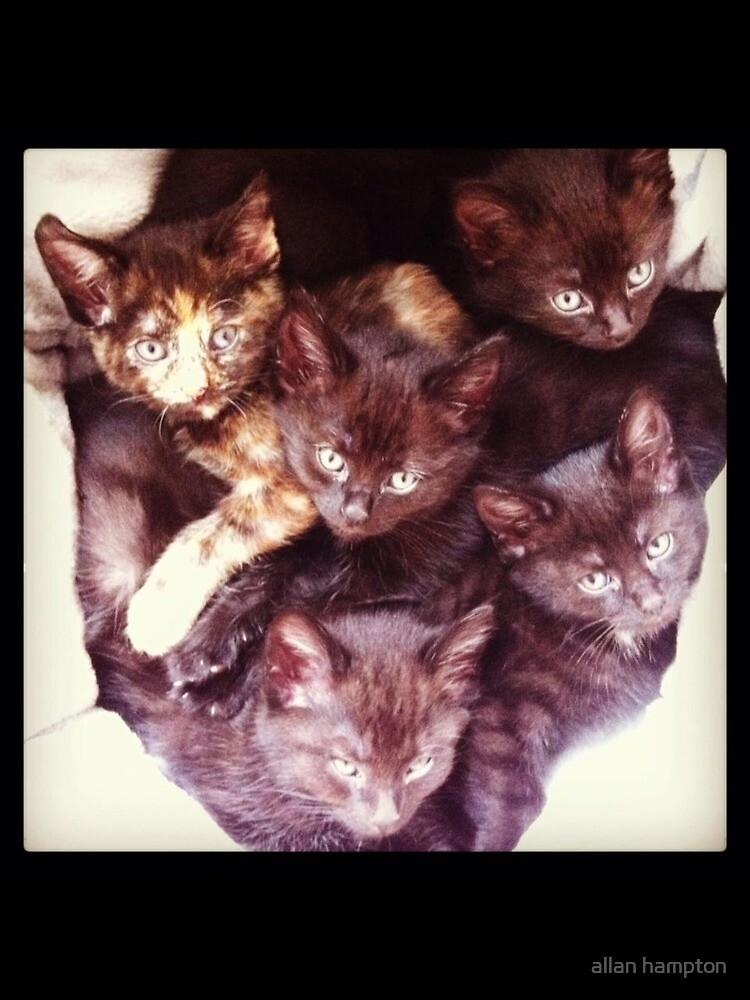 Our first set kittens by allan hampton