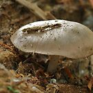 Shroom On A Log by Ron Russell