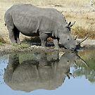 Rhino reflections by jozi1