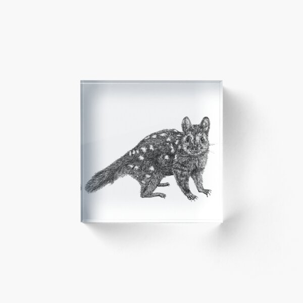 Amanda the Quoll Acrylic Block