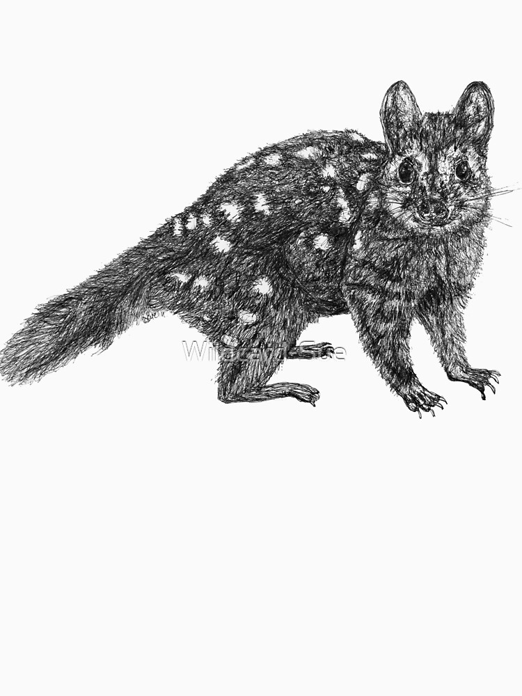 Amanda the Quoll by Wildcard-Sue