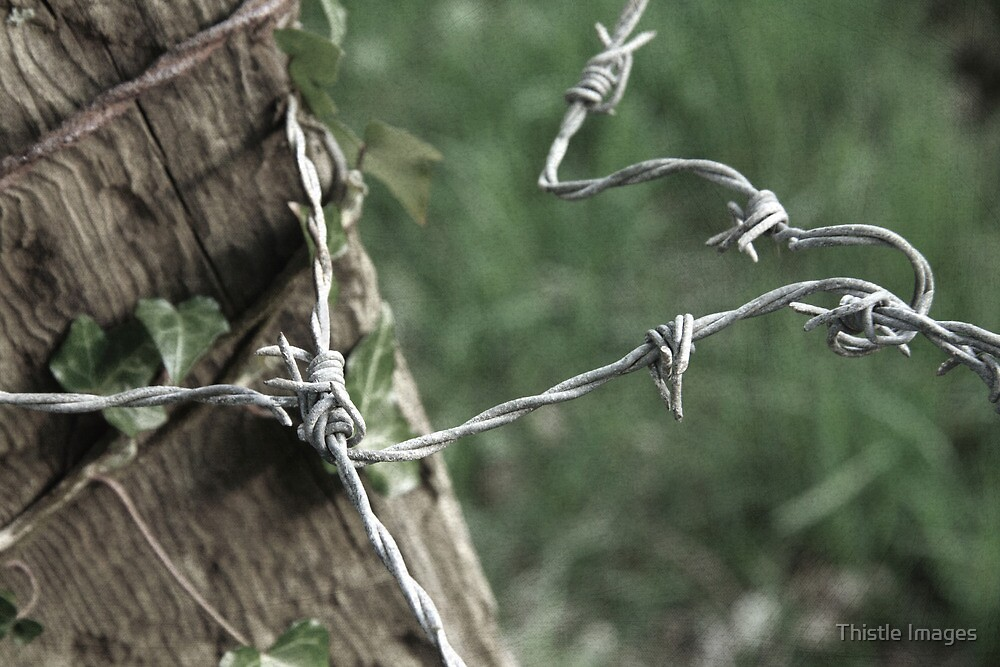 barbed wire fence by Thistle Images