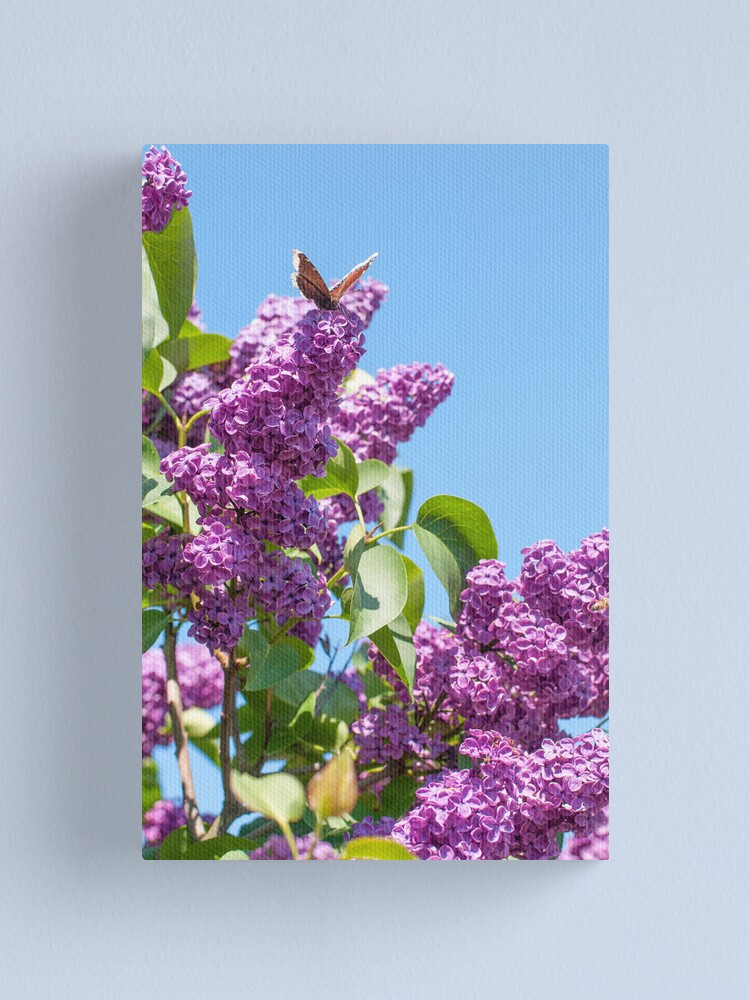 Alternate view of Lilac Bloom and Butterfly Canvas Print