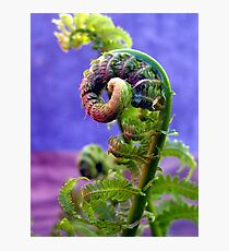 pig tails on a fern Photographic Print