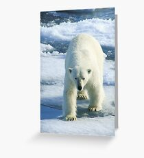 Polar Bear Greeting Card