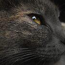 Feline Beauty by schizomania