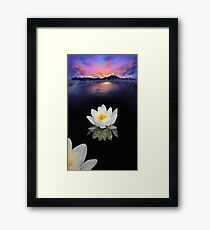 Lotus at Dawn Framed Print