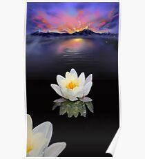 Lotus at Dawn Poster