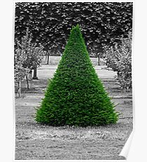 Conical Conifer Poster