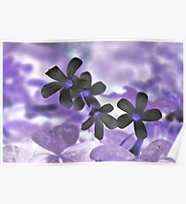 Oxalis Flower - Colored Foil Poster