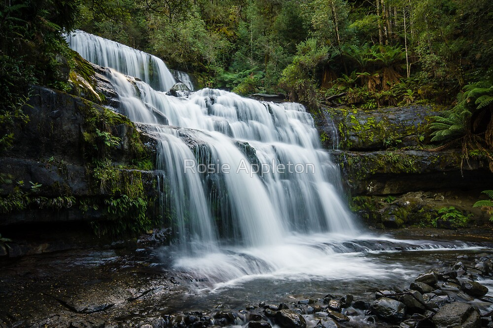 Liffey Falls II by Rosie Appleton