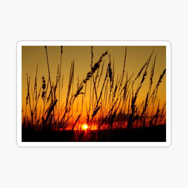 Sunset behind the grass Sticker