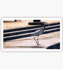 Blue Heron Sticker