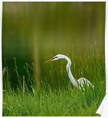 The Great Egret 3 Poster